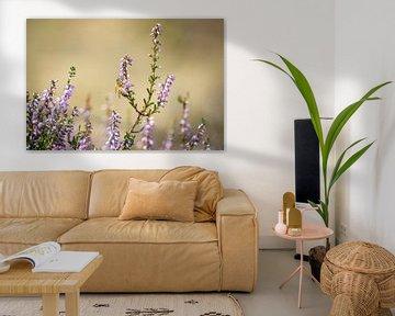 Eine Biene sitzt auf der blühenden Heide von Michel Geluk