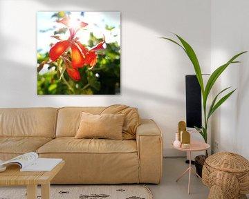 Sunny flowers  von Iris Lok