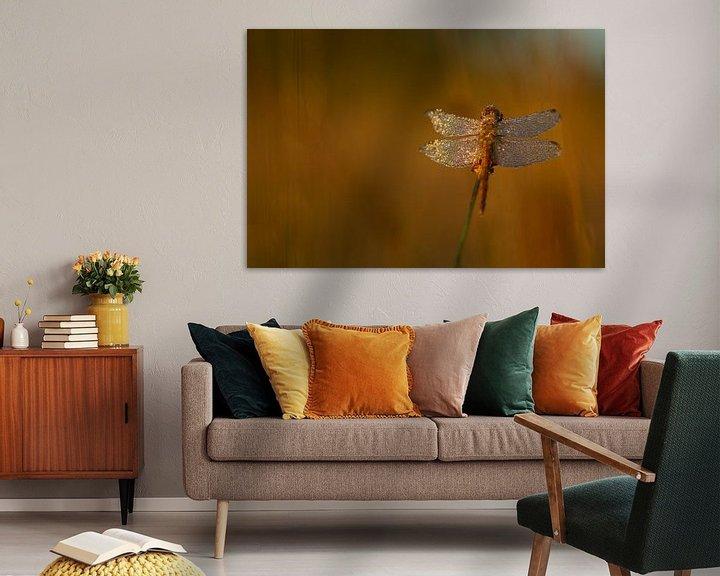 Beispiel: Dragonfly with dew von Tom Smit