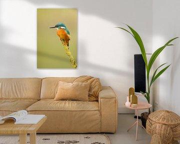 Ijsvogel von Tom Smit