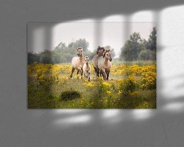vier konikpaarden