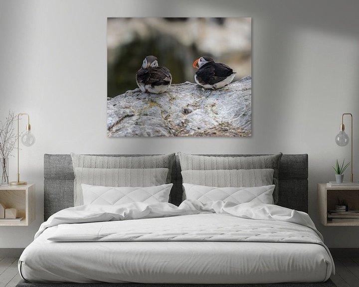Sfeerimpressie: Papegaaiduikers op de rotsen van Robin Voorhamm