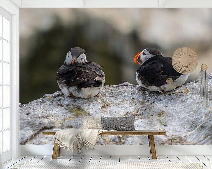 Sfeerimpressie behang: Papegaaiduikers op de rotsen van Robin Voorhamm