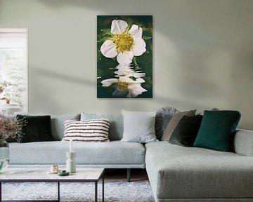 Blütenwasser - Erdbeer Smoothie von Christine Nöhmeier