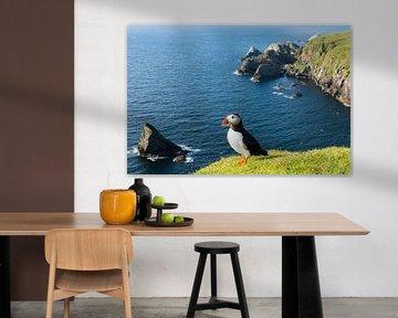 Macareux moine au sommet d'une falaise sur la côte écossaise sur Nature in Stock