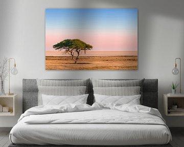 Einsamer Kamel-Sanddorn wächst vor einer riesigen Salzfläche bei Sonnenaufgang. von Nature in Stock