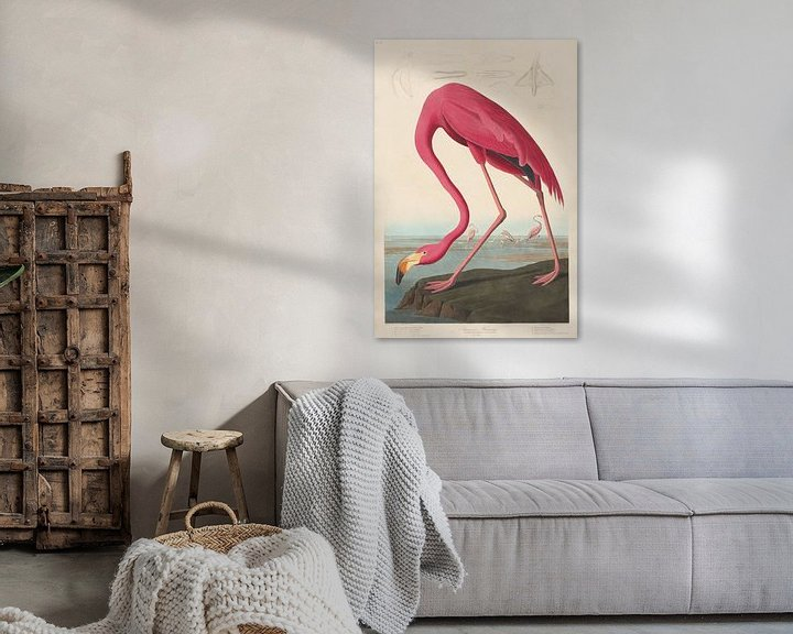 Beispiel: Amerikanischer Flamingo - John James Audubon