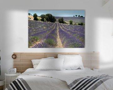 Lavendellandschap von Jolanda van Eek