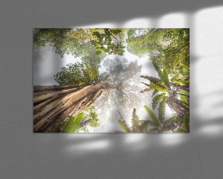 Sfeerimpressie: Hoge boom in Thailand van Marcel Derweduwen