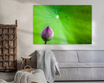 lotus bloem von Marcel Derweduwen