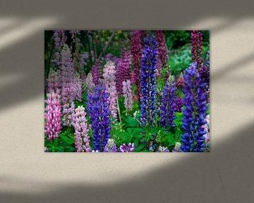 Lupinen in bloei van Ellen Driesse