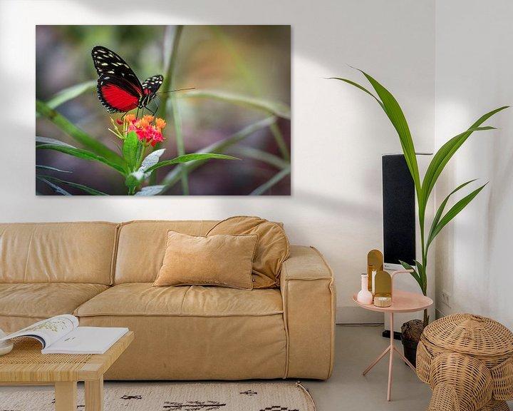 Sfeerimpressie: Rode Heliconius Hecale Vlinder van Tim Abeln