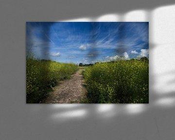 Palmerswaard , pad door koolzaadveld van Cilia Brandts