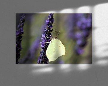 vlinder op lavendel van Jolanda van Eek