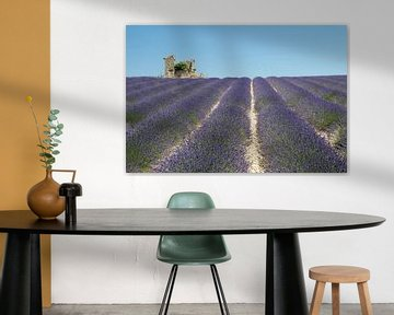 Kleine ruïnein lavendelveld sur Jolanda van Eek