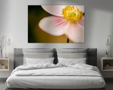 Macro bloem analoog von Heleen van de Ven