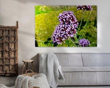 Bloemen & planten van Stef De Vos