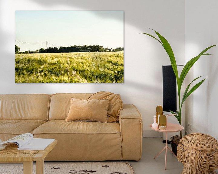 Sfeerimpressie: Landschap graanveld van Stef De Vos