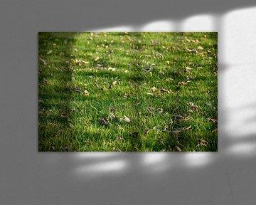 Gras jong groen von Stef De Vos