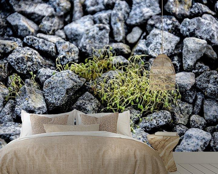 Beispiel fototapete: Stenen Jong groen  von Stef De Vos