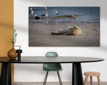 Zeehond op strand Noordzee van Randy van Domselaar