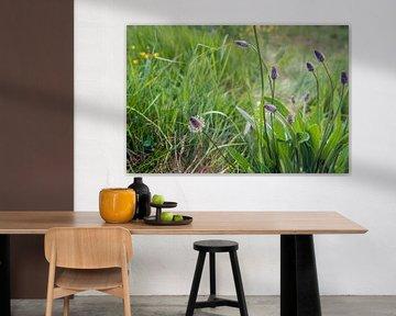 Blume und Knospen eines Schmaler Wegerich Pflanze von Ruud Morijn