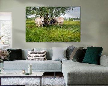 Groepje koeien onder boom von Ruud Morijn