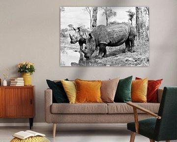 White Rhino Duo von Lotje Hondius