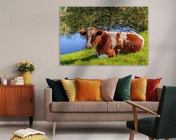 Rote und weiße Kuh, die im Gras grübelt. von Ruud Morijn