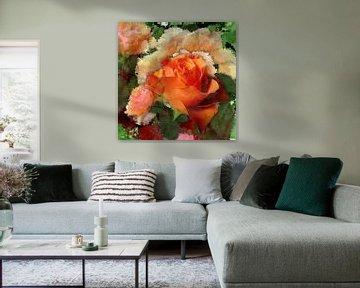 rose 4 van Gertrud Scheffler
