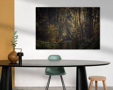 Herbstwald van zwergl 0611
