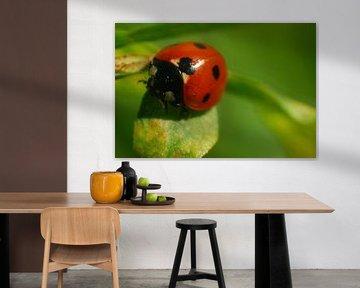 Lieveheersbeestje close-up op groen blaadje van Klaas Dozeman