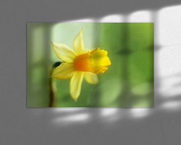 Gele narcis von LHJB Photography