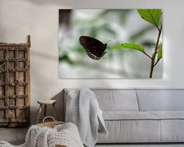 Vlinder van Jeroen Koppes