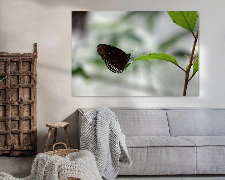 Beispiel: Vlinder von Jeroen Koppes