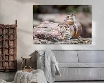 Eekhoorn , Squirrel sur Lidia Berkers