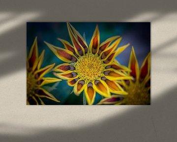 Flowers von Maarten Leeuwis