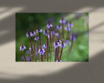 Lila bloementjes von Lotte Veldt