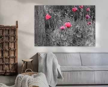 Klaprozen zwart/wit met kleur von Fotografie Sybrandy
