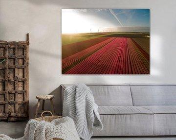 Tulpen velden von Bart Houx