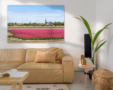 Roze tulpen in Lisse sur Michel van Kooten
