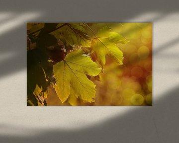 Im grünen Bereich  van zwergl 0611