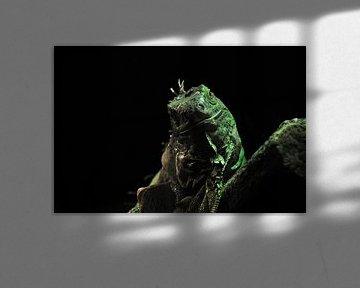 Lizard von Victor Van Rooij