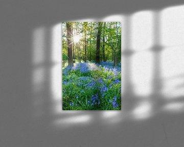 Wilde hyacinten. Amelisweerd, Bunnik (NL) van Sjaak den Breeje
