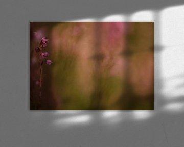 Heide in bloei van Incanto Images