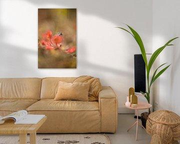 Zonnedauw met juffer von Incanto Images