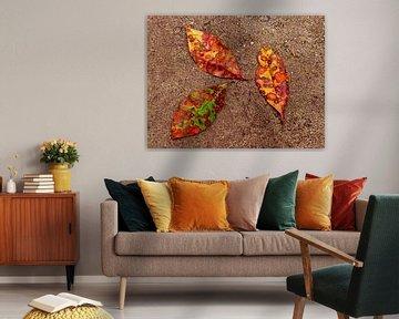 Currantly 1 (Herfstbladeren van de Krentenboom) van Caroline Lichthart