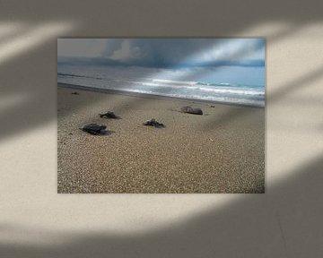 Schildpadden in Costa Rica von Maartje Abrahams