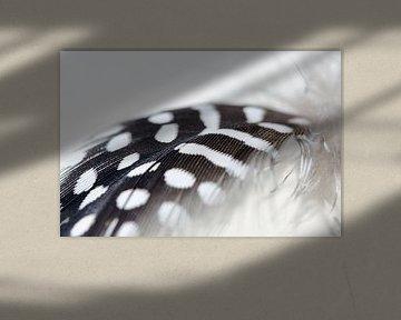 Vederlicht veertje zwart wit