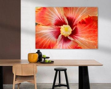 Hibiscus van RNK Fotografie